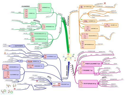 Dit is een voorbeeld van een mindmap die ik maakte voor biochemie met een aangekocht iMindmap programma, te vinden op www.ThinkBuzan.com