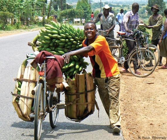 bananen6