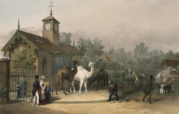 View_of_the_Zoological_Gardens1835