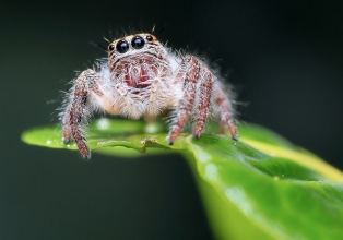 animal-arachnid-blur-257554.jpg