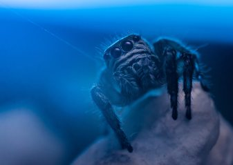 aquarium-blue-creepy-628996
