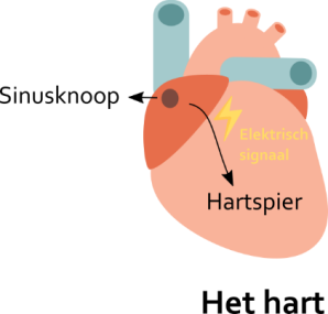 hart1